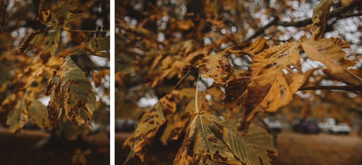 2 photos of Autumn leaves