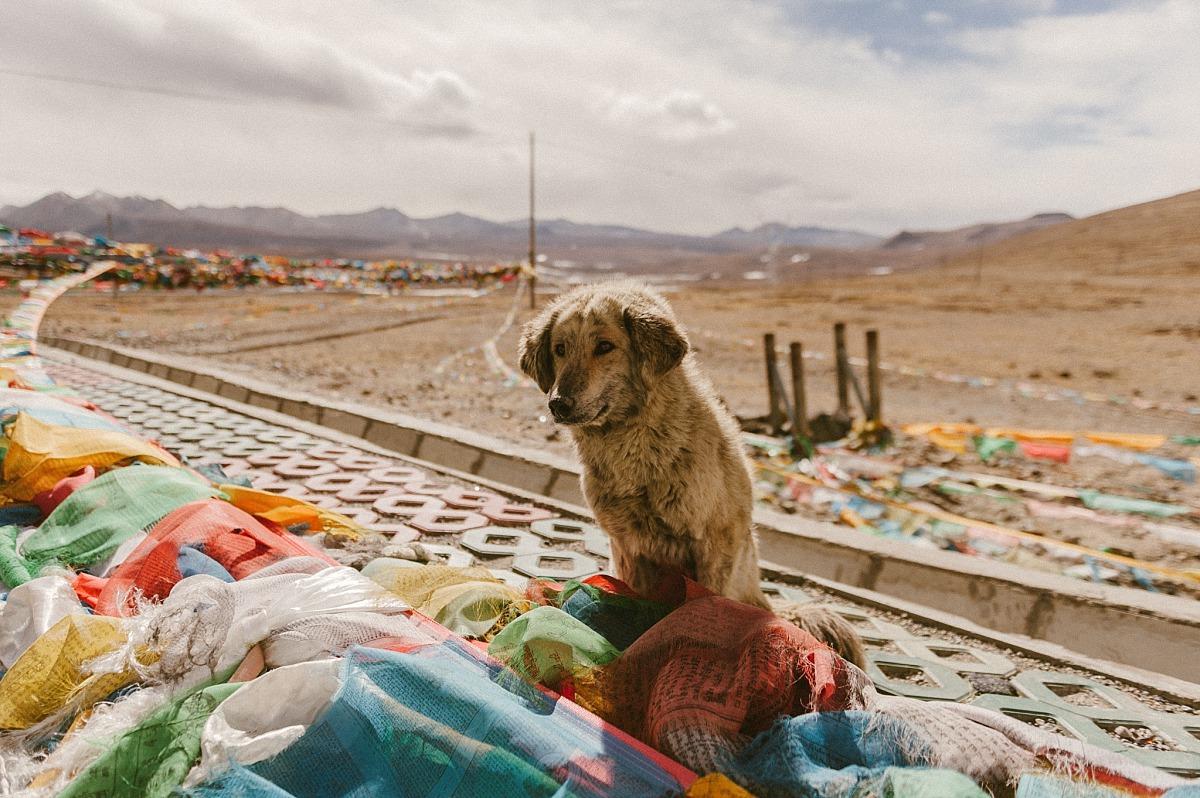 Photo of sad dog in the Himalayas
