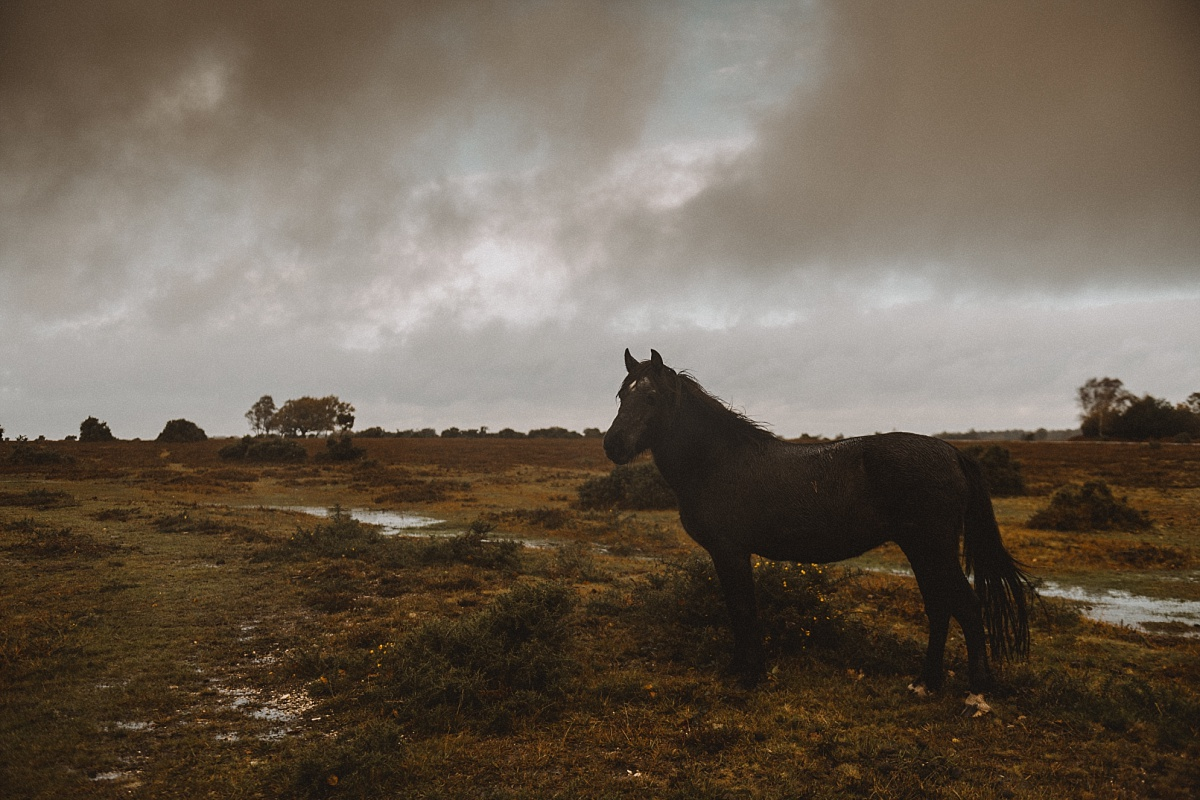 Wild Horse in The New Forest
